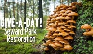 Give-A-Day Seward Park Habitat Restoration! @ Seattle Seward Park | Seattle | Washington | United States
