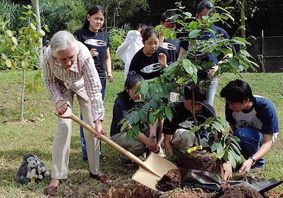 Dr. Jane Goodall and Roots & Shoots members plant trees at the Singapore American School in Singapore.